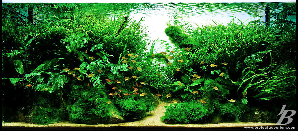 Pics collection of truly inspired aquascape kinds of for Planted tank fish