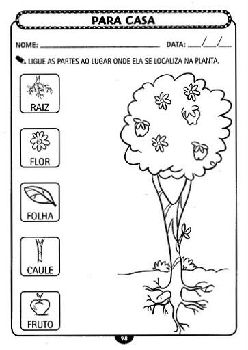 atividades alfabetizacao jardim horta pomar:ATIVIDADES 1° ANO CIÊNCIAS GEOGRAFIA HISTÓRIA ALFABETIZAÇÃO
