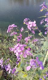 I fiori di Eva, dalle rive dell'Arno