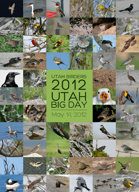 Utah Big Day, 2012 Birding Big Day