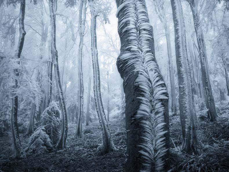 Imagen del día: Escarcha cubriendo troncos de árboles en un bosque Checo