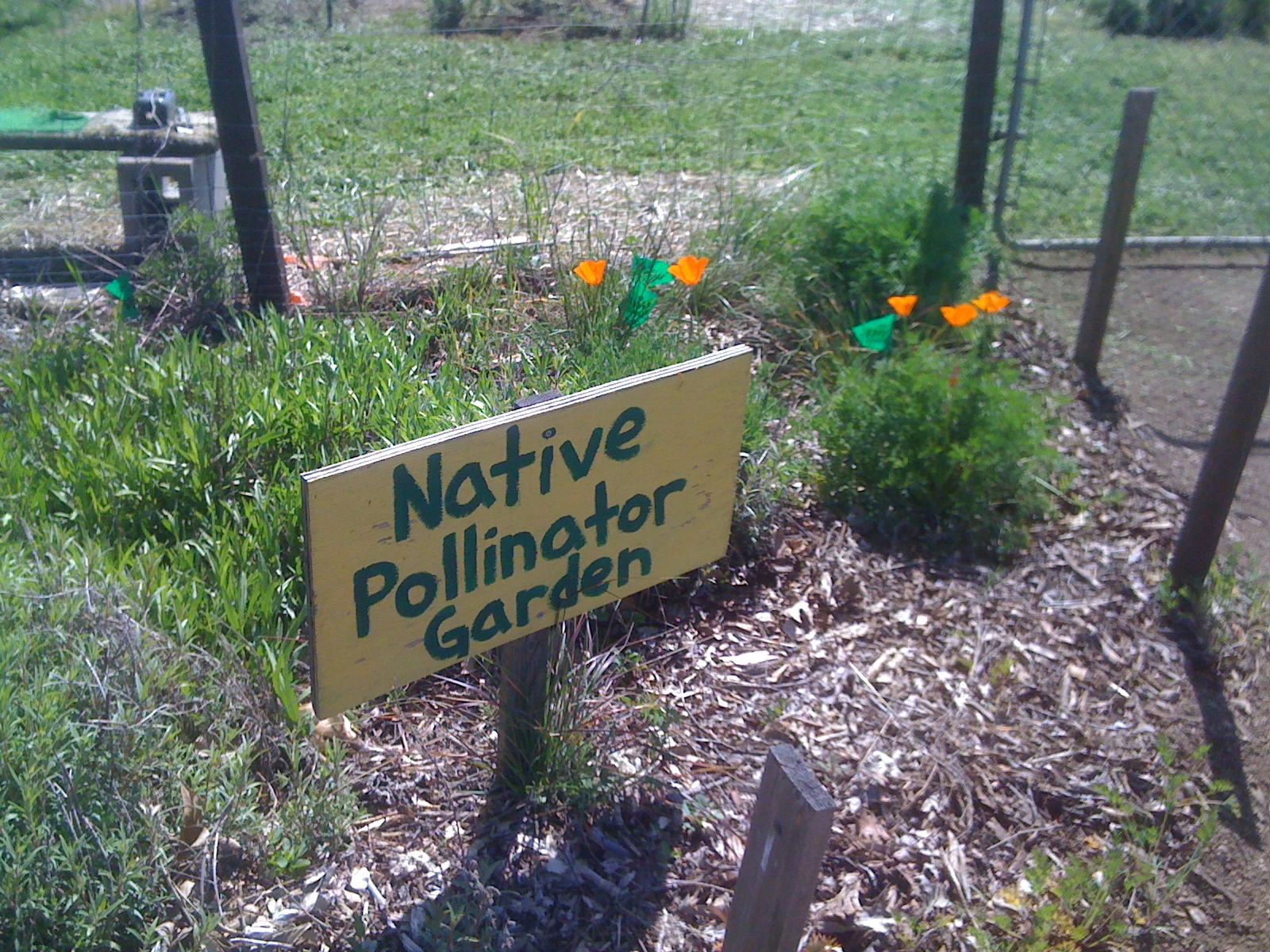 Geno 39 s garden design coaching wildflower wonders for Soil born farms