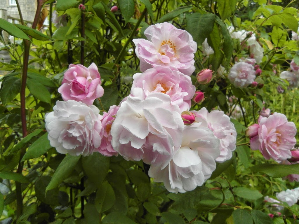niki fretwell rose season
