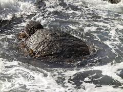 江の島岩屋・亀石
