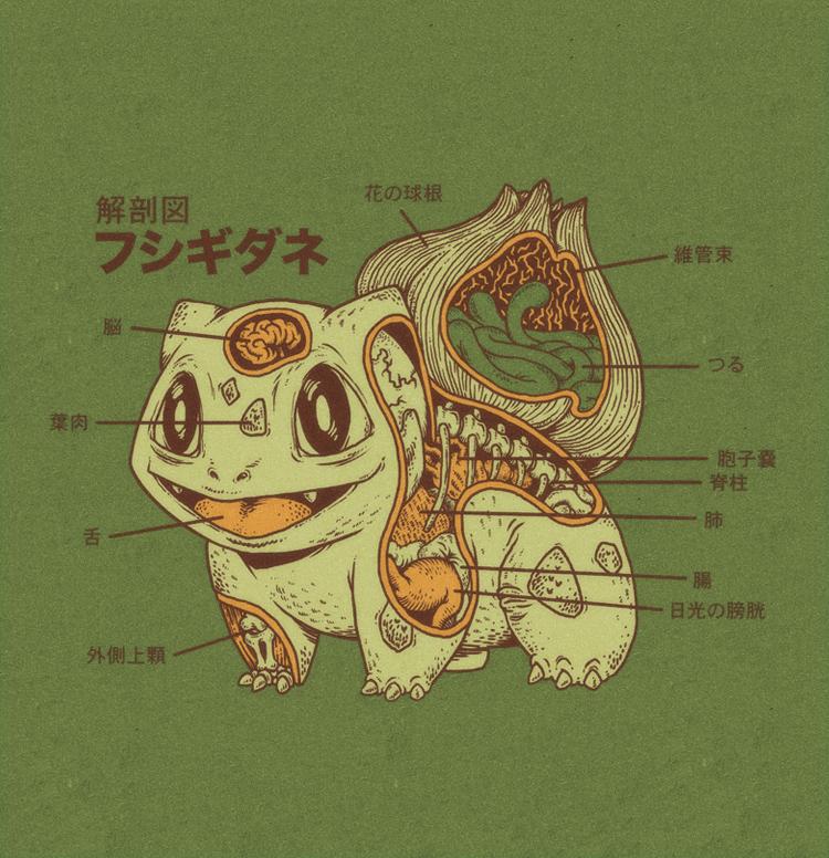 tardes de vicio: Anatomía Pokémon