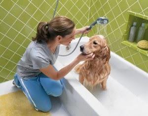 Mascotas y Presupuesto, 10 Tips para Ahorrar Dinero