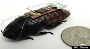 Kecoa Bisa Mencari Korban Bencana