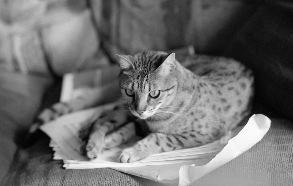 Black and White Film Photo of a Cat