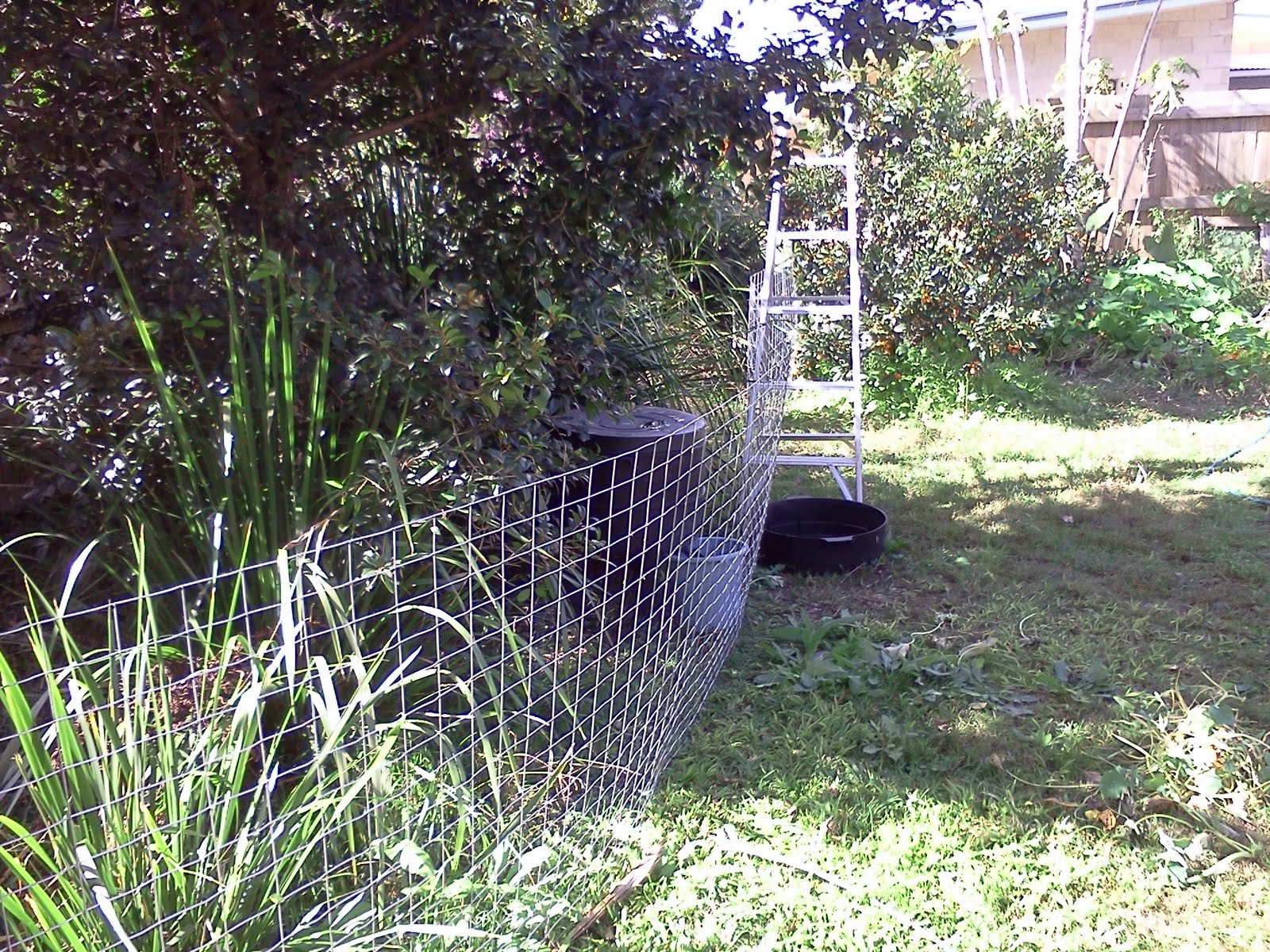 biodiversity in my backyard cat proof enclosure