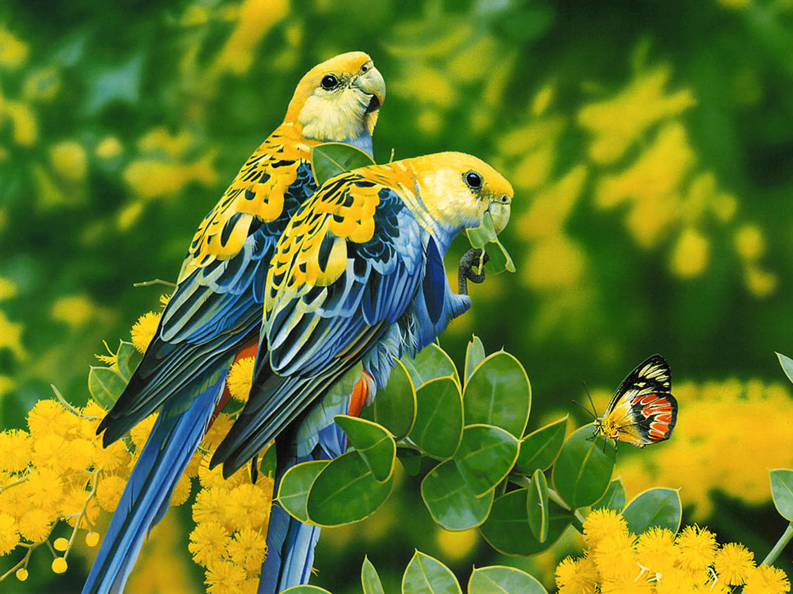 gallery mangklex: love birds wallpapers