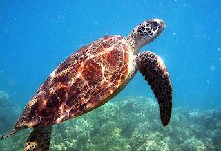 Best Honeymoon Destinations In Australia - Great Barrier Reef 4