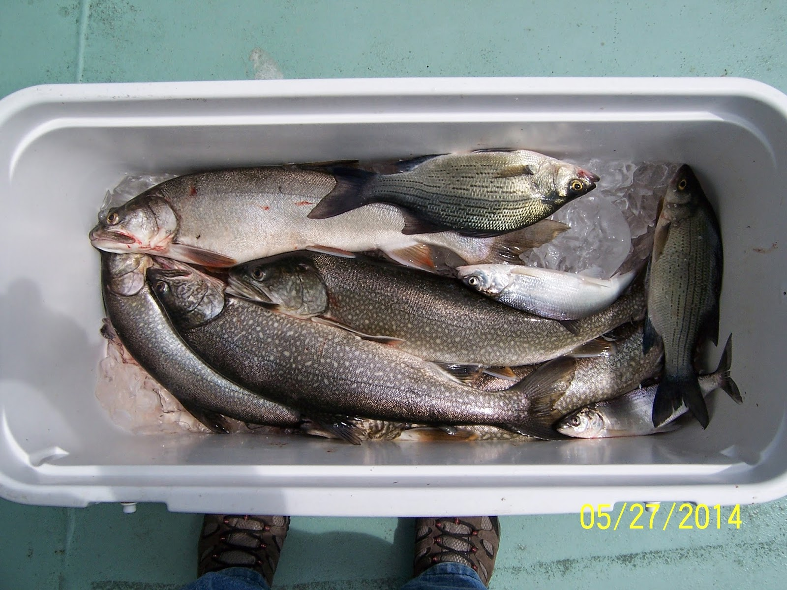 Norton's Lake Report and Catch of the Day: LAKE TROUT BITE ...