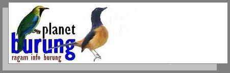 Planet Burung