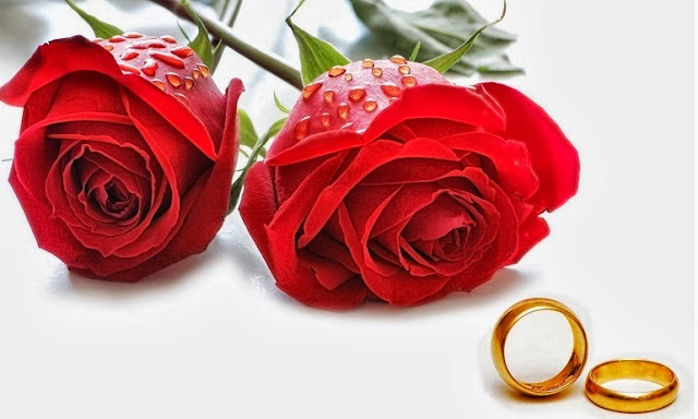 propose day rose images