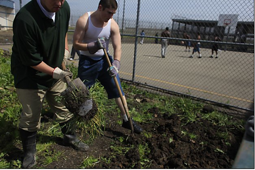 California Correctional Crisis State Juvenile Program Profile