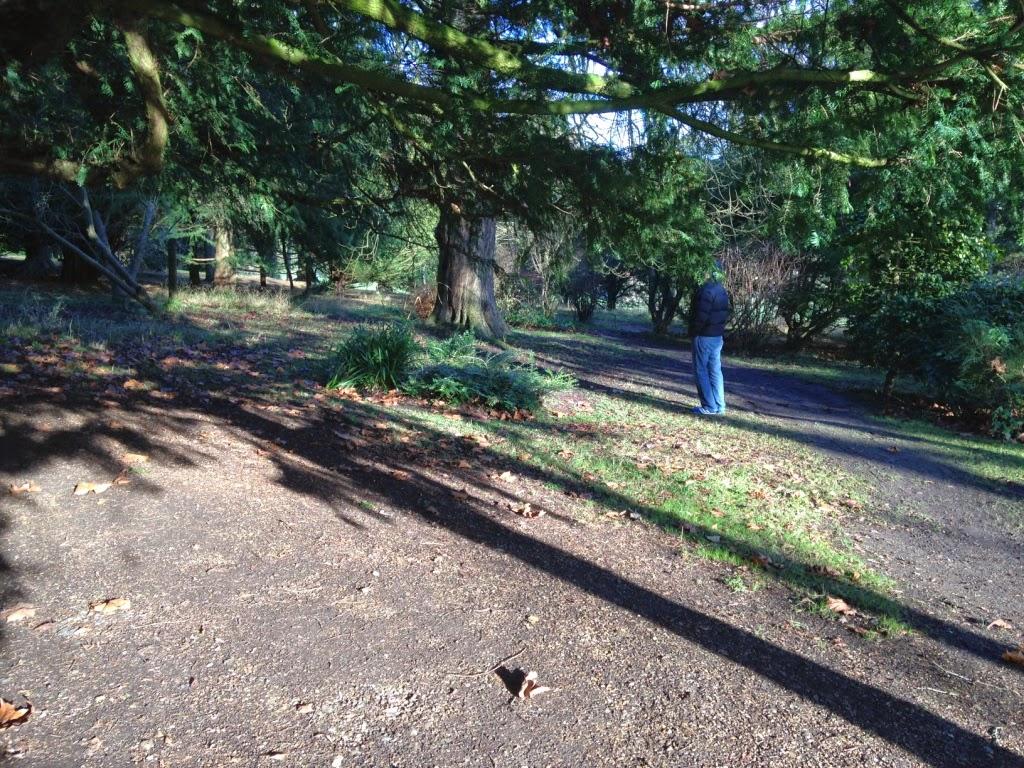 Hughenden trees