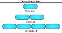 Bentuk dan Ukuran Bakteri