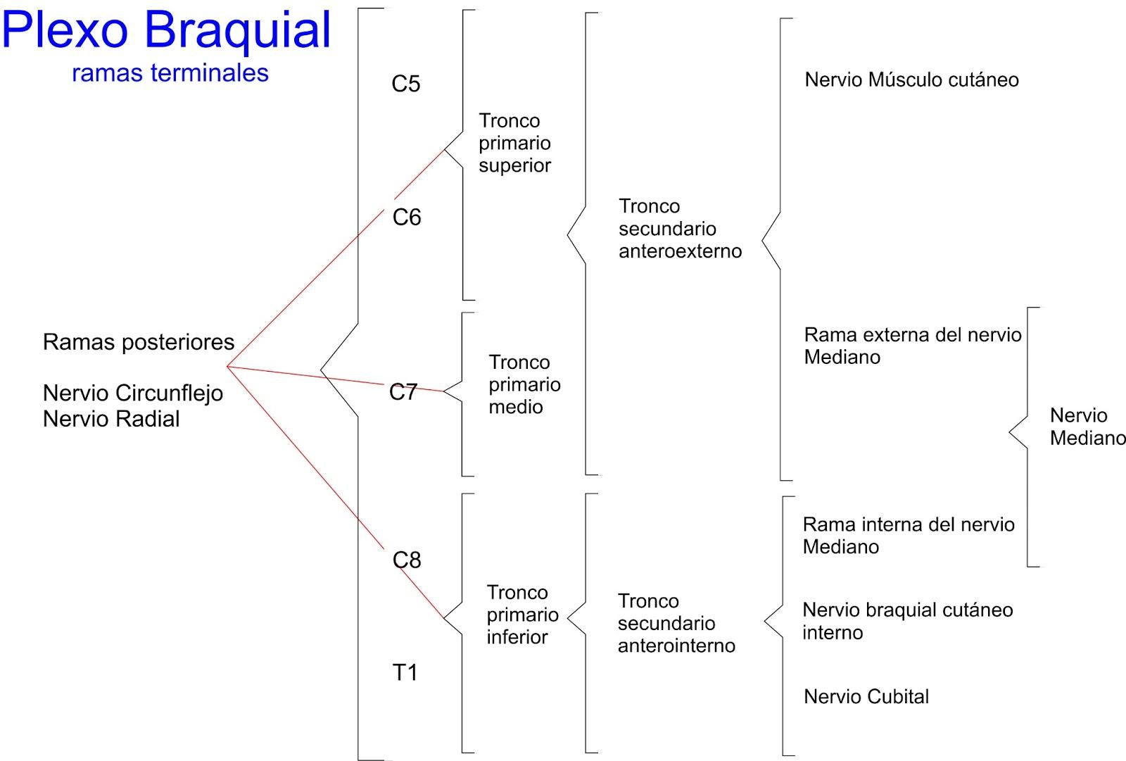 Anatomía para TODOS