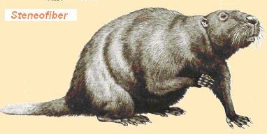 castores prehistoricos Steneofiber
