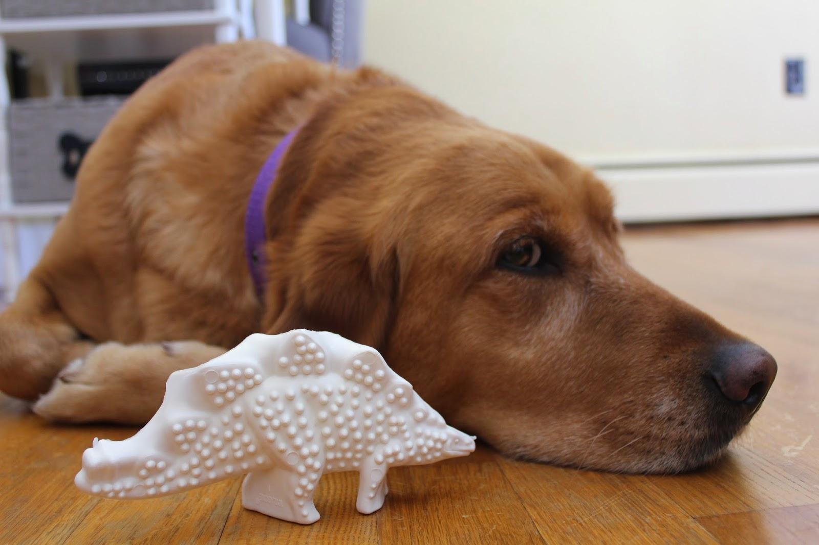 dog and nylabone dinosaur dental chew toy