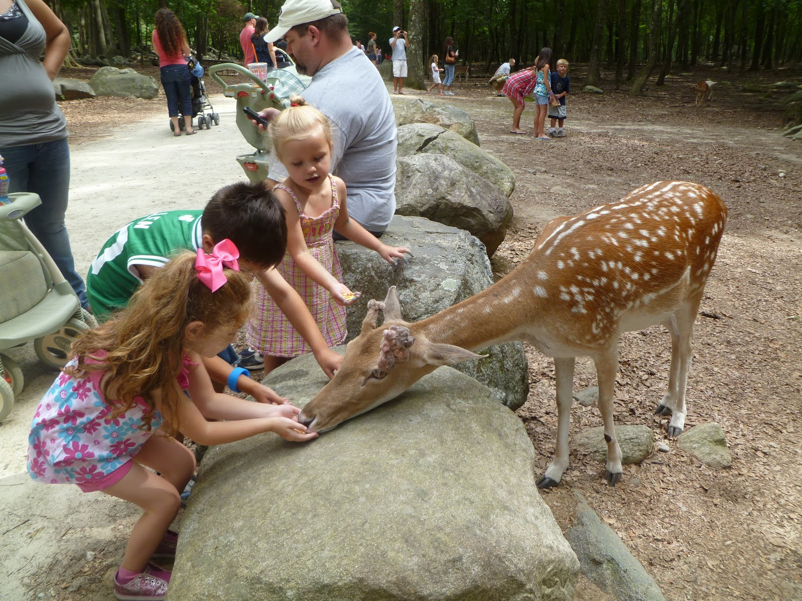 Franklin park zoo discount coupons 2019