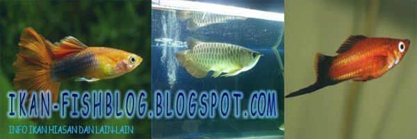 Ikan-Fish Blog