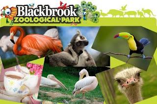 zoo, Groupon