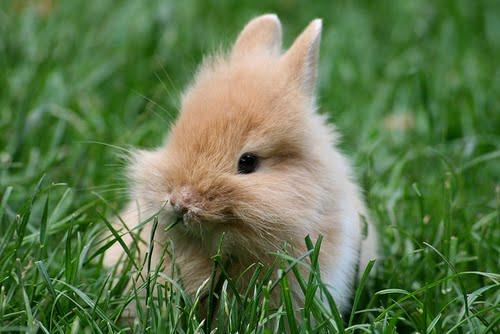 Baby tiere sind so süüüß