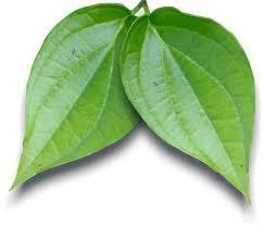 21 Manfaat daun sirih bagi kesehatan