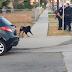 Αίσχος: Αστυνομικός στην Αμερική σκοτώνει σκυλί με πιστόλι [video]...