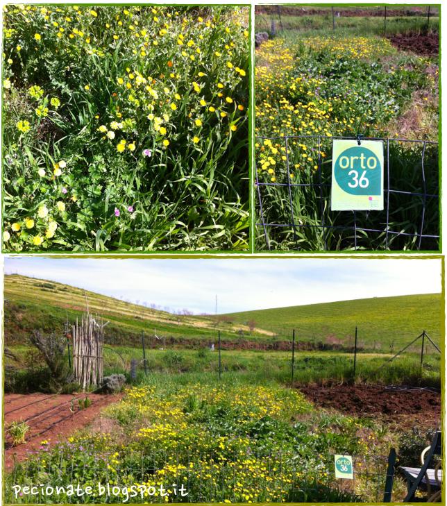 l'orto di primavera e qualche idee per cucinare con le erbe spontanee