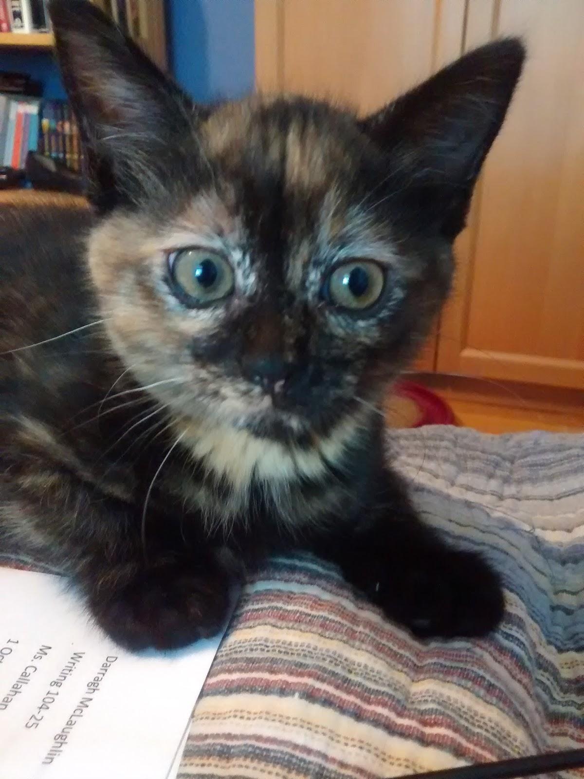 kitten heel wedge