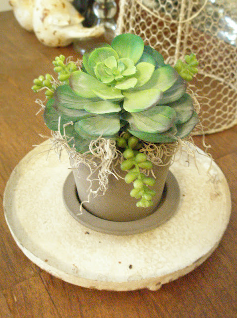 succulent arrangement DIY