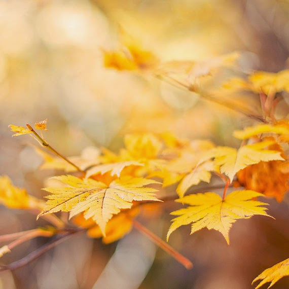 https://www.etsy.com/listing/108609739/autumn-photography-yellow-golden-orange?ref=favs_view_4