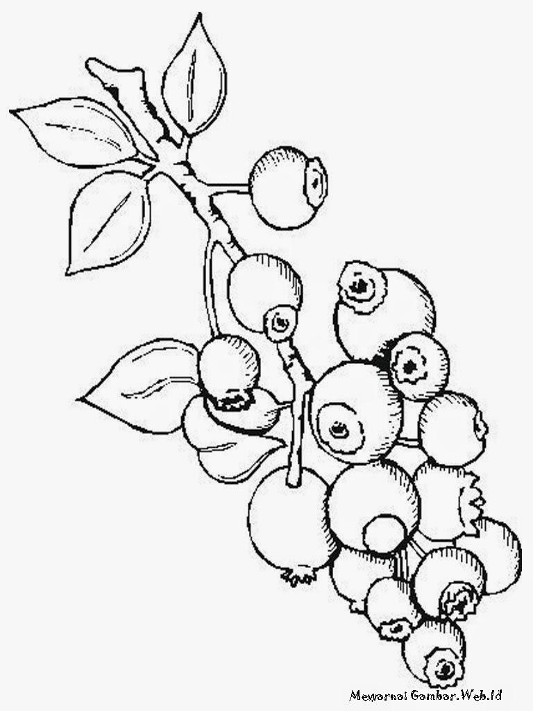 Belajar Mewarnai Gambar Buah Blueberry