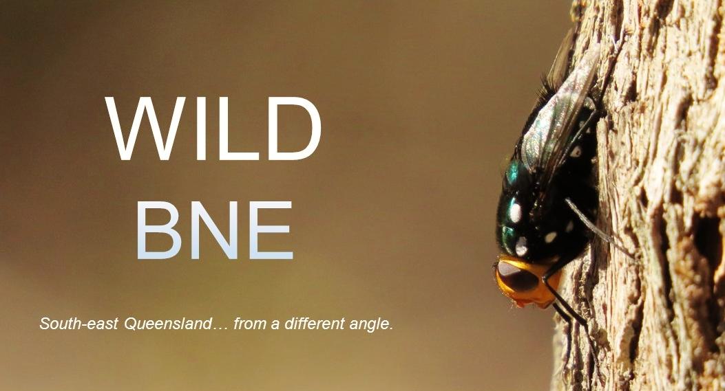 Wild BNE
