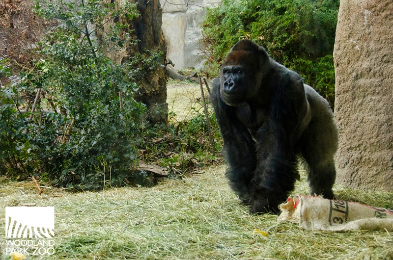 Woodland Park Zoo Blog July 2014