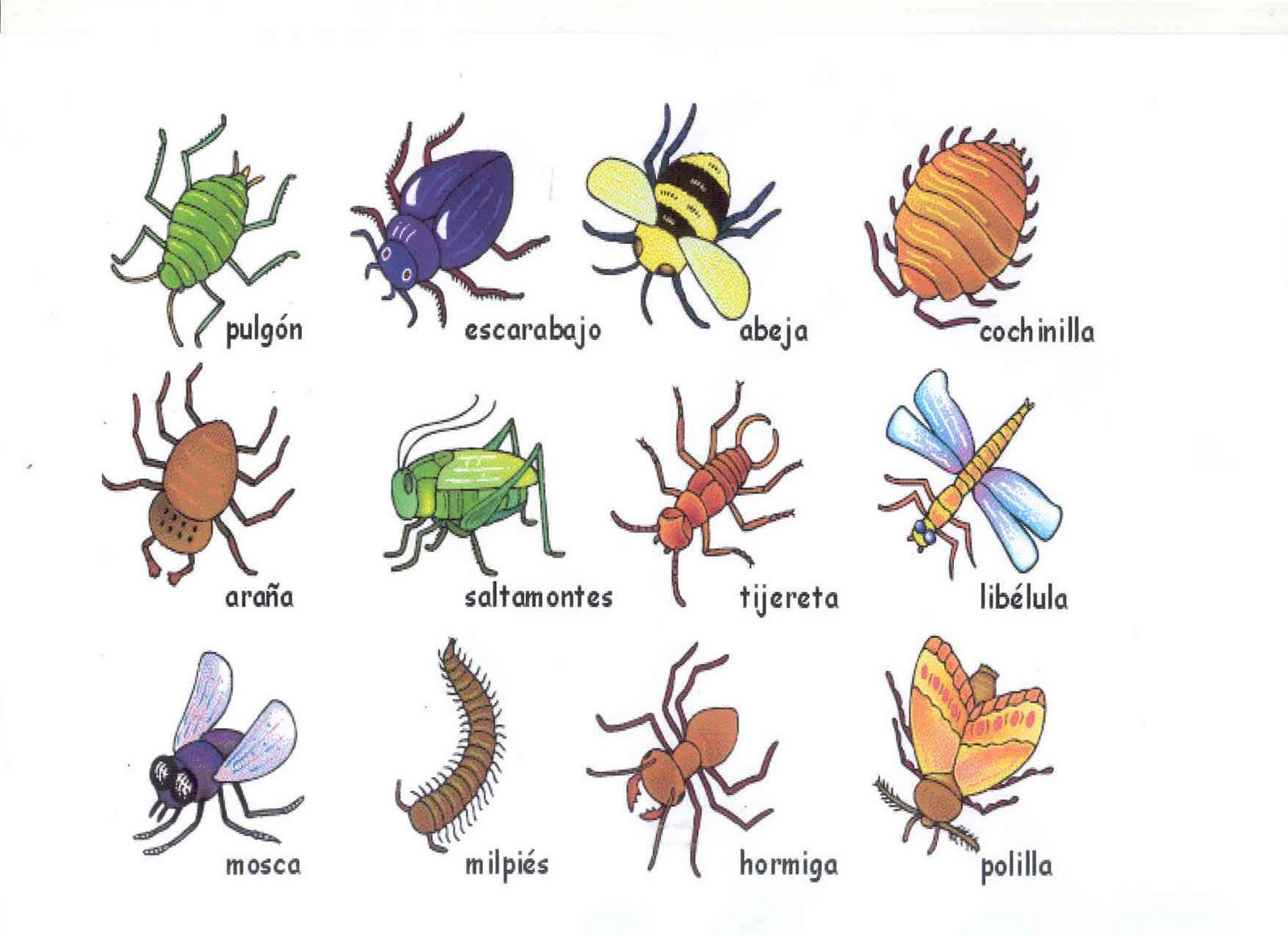 related keywords  u0026 suggestions for insectos y sus nombres