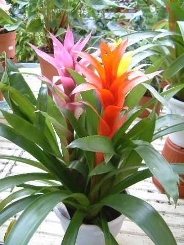 El blog del descanso la decoraci n m s natural apuestas - Ver plantas de interior ...
