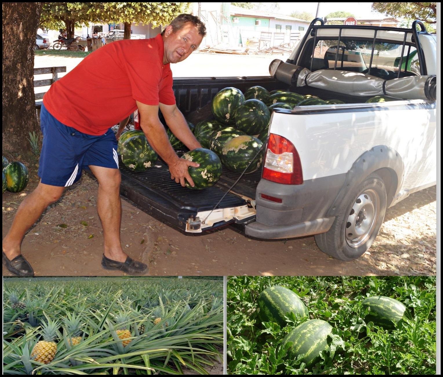Sitio 3R. Grande produção de abacaxi no município de Nova Guarita