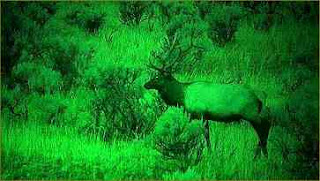 Night Vision Photography