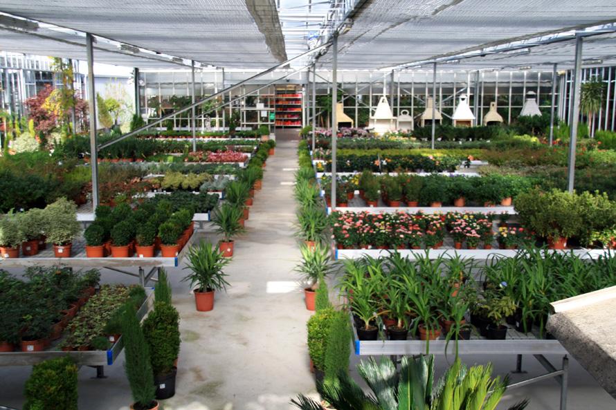 Welcome to 3 years salida a un vivero for Que es un vivero de plantas ornamentales