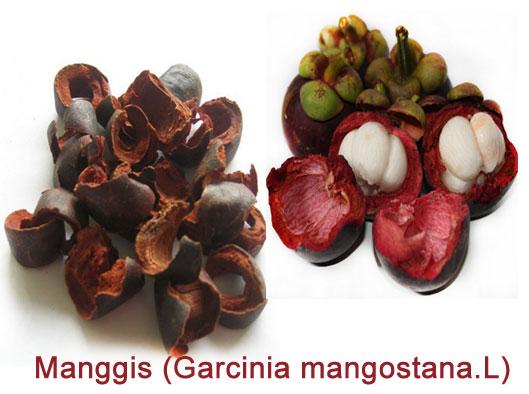 khasiat kulit manggis buah manggis merupakan tanaman buah yang berasal ...