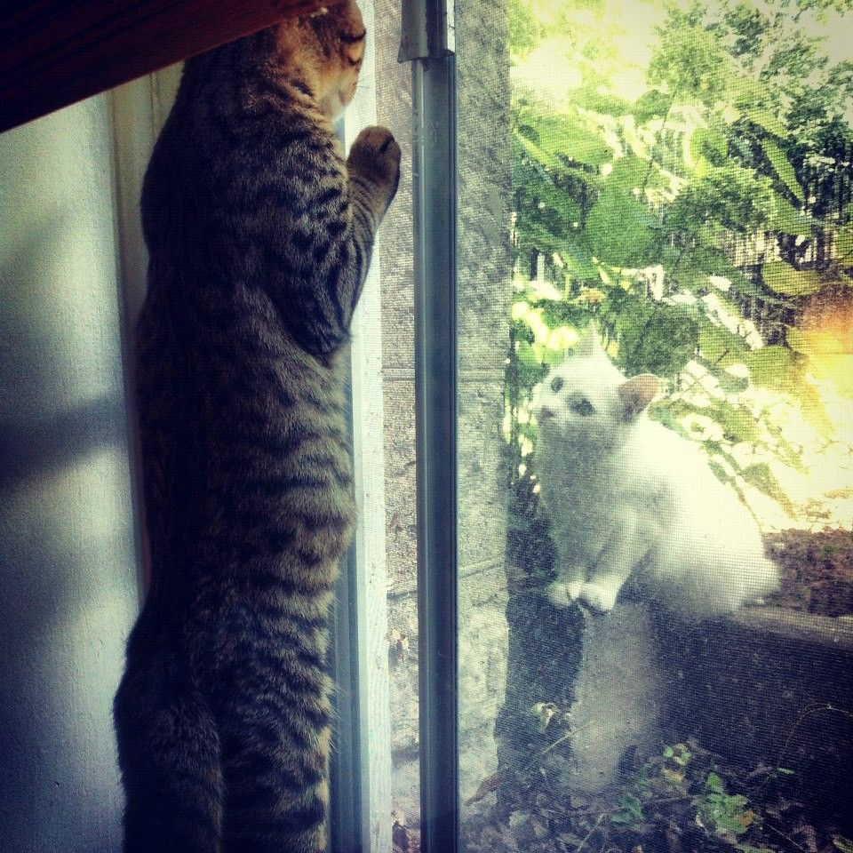 funny cat pictures, neighbour cat