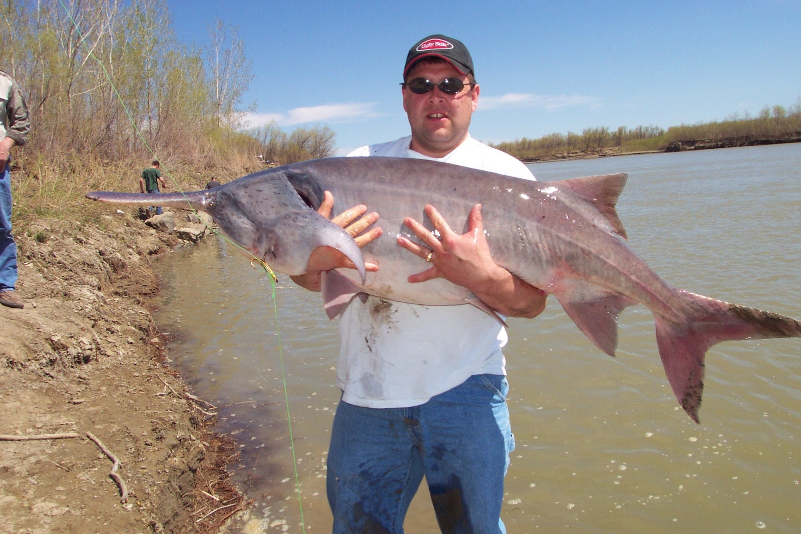 Big fishes of the world paddlefish american polyodon for Missouri state record fish