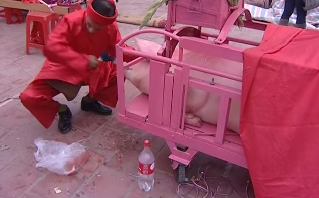Kinh hoàng lễ hội chém lợn Bắc Ninh