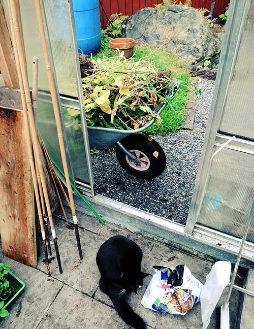 Städning i växthuset