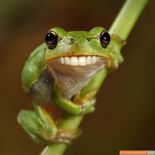 funny frog new photos 2011 funny and cute animals