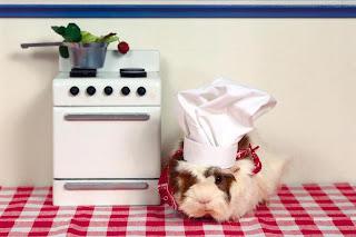 Un gato cocinero Fotos tiernas de gatos
