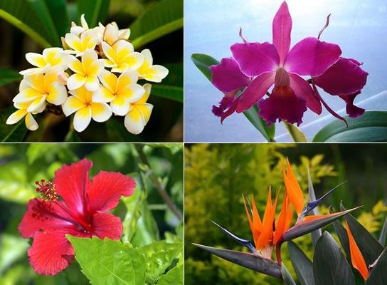 , plantas y flores Cómo hacer crecer plantas y flores tropicales